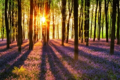 Флизелиновые фотообои Wizard & Genius: Лес на рассвете, 366х254 см