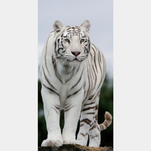Фотообои флизелиновые «Тигр» 100х200 cм в Леруа Мерлен